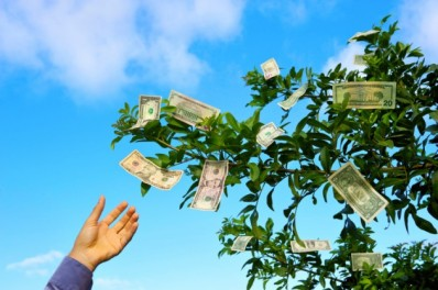 Money-Tree-Damon_Moss-630x419